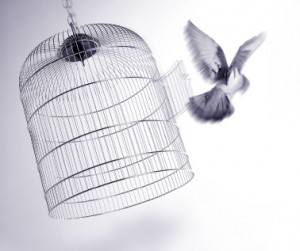 Caged-Bird-freed-300x251