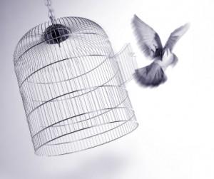 Caged-Bird-freed-300x251