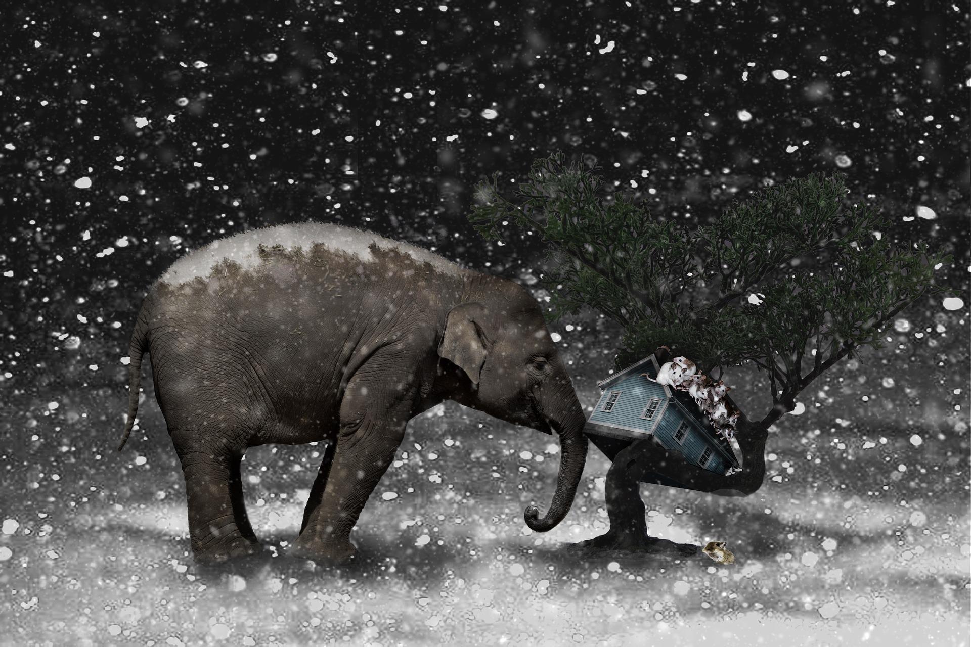 elephant-2910293_1920