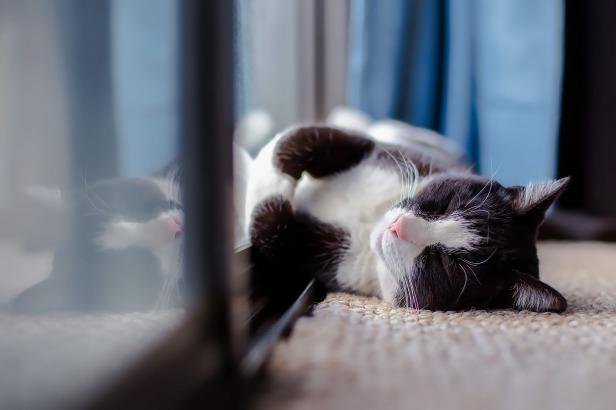 cat-1903024_1920