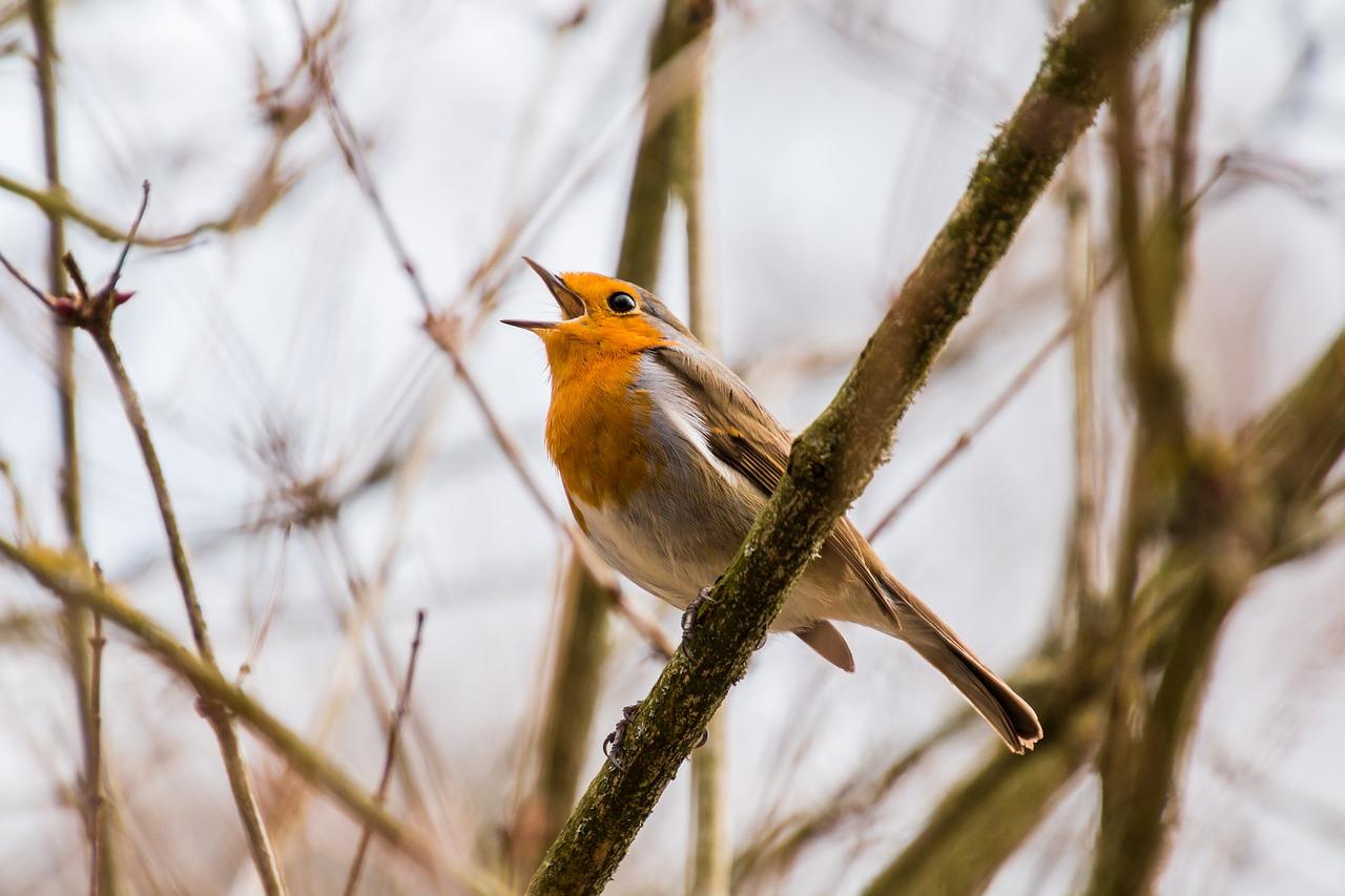 bird-2119874_1280